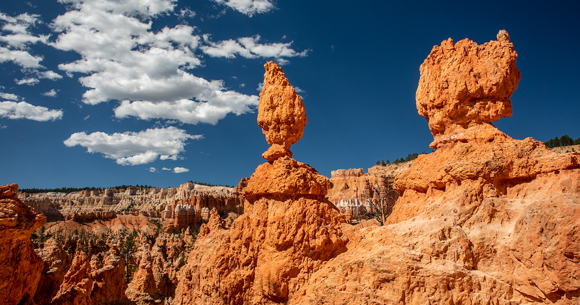 bryce national park trail